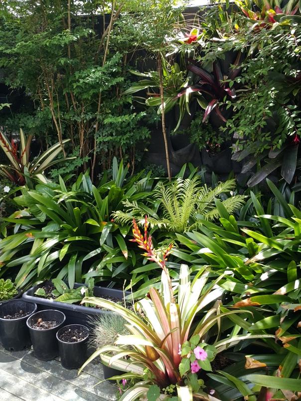 Leigh's beautiful garden
