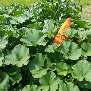 Gardenerd in the pumpkin patch