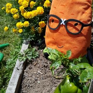 Gardenerd in the peppers