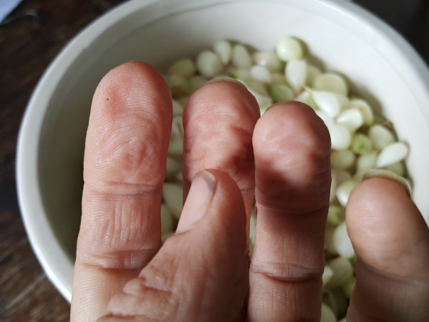 The dangers of soaking onions