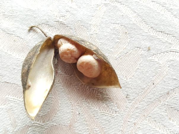 Two chickpeas per pod