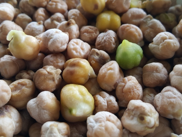 Homegrown chickpeas