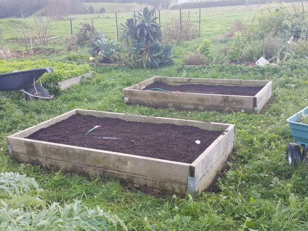 Enriched asparagus beds