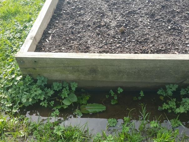 Floody garden