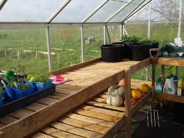 A tidy greenhouse