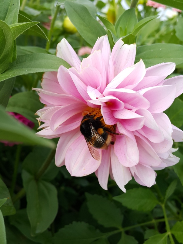 The bees loved my flower garden