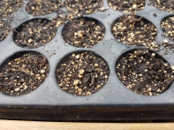 empty seed trays