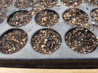 empty seed trays