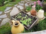 Sam has his new season garden sorted