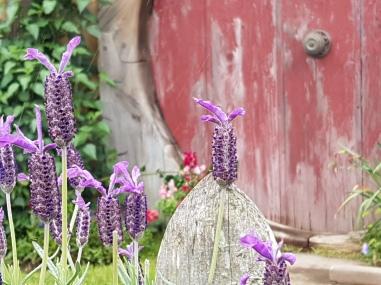 The lavender looks lovely against the hobbit hole