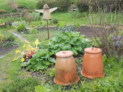 Forced rhubarb and hobbit sized scarecrows