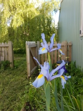 Welcome to my spring garden