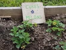 Strawberries and cucumbers
