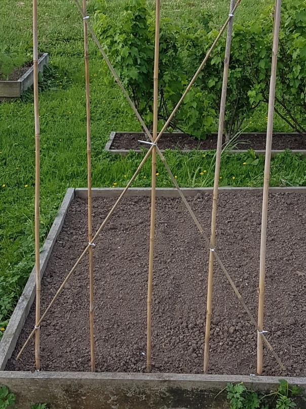 Bean pole frame