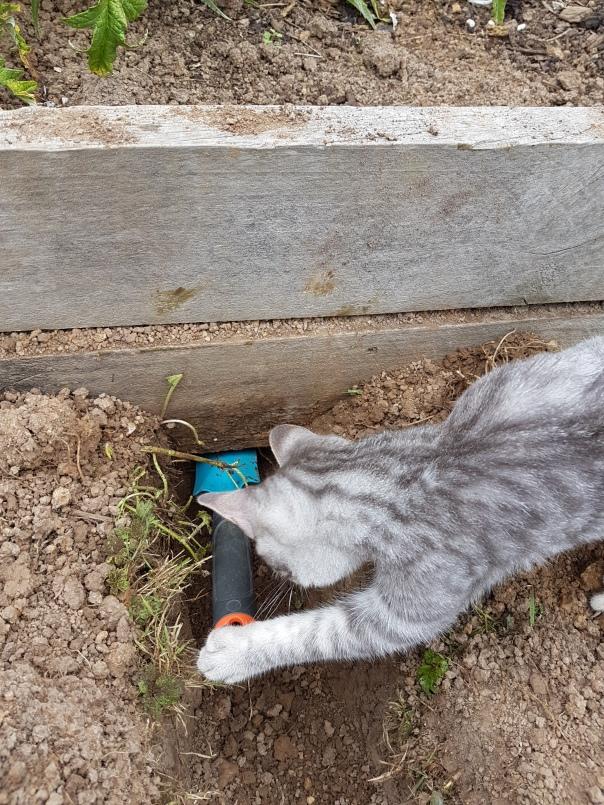 Kitten digging