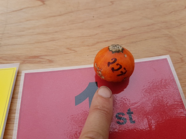 Smallest pumpkin