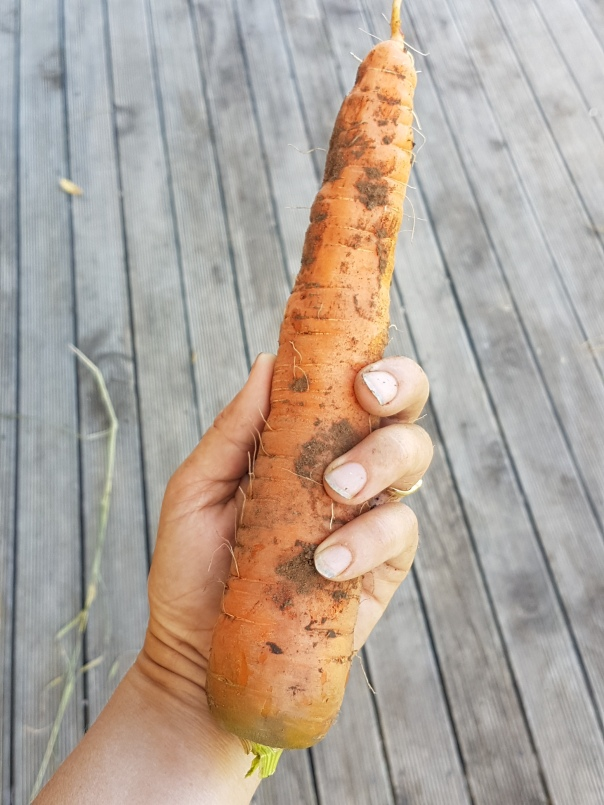 Not a bad carrot