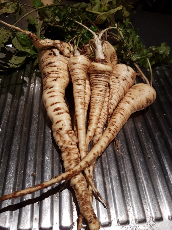 Parsnips for dinner