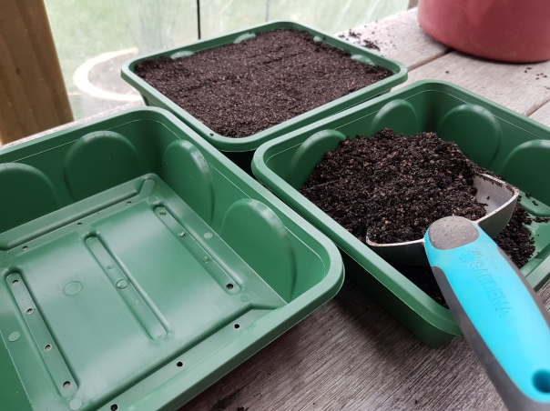 Seed trays