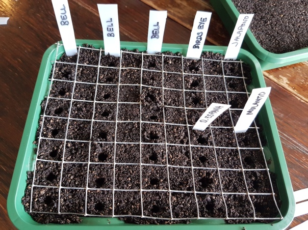 Spacing seedlings
