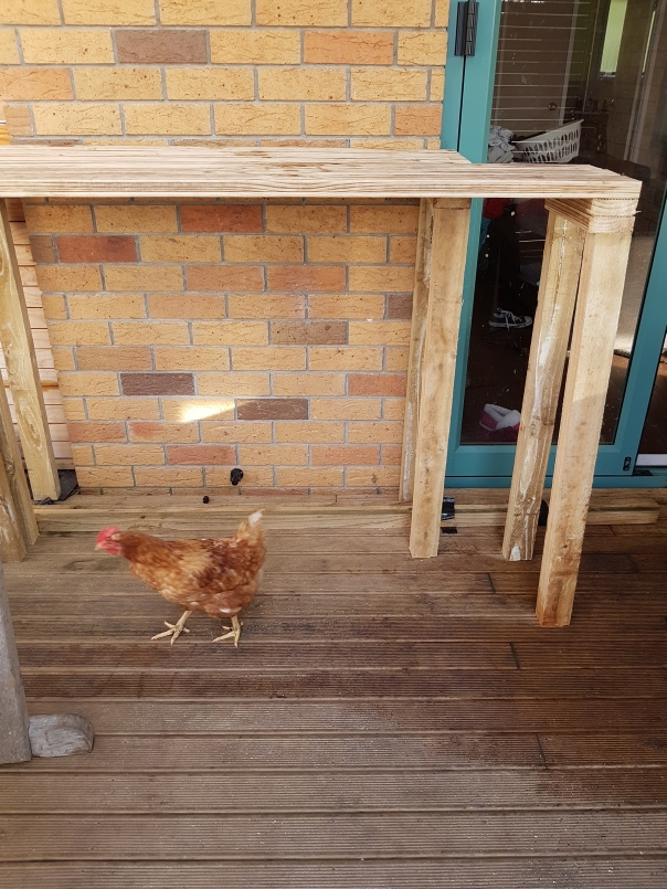 Chicken and shelves