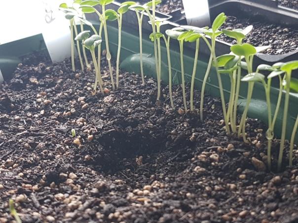 Seedlings and footprints