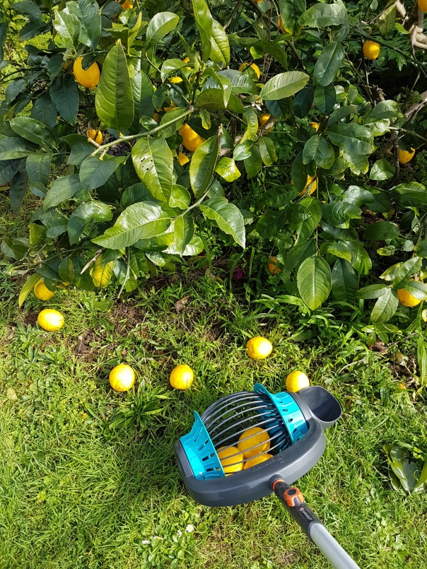 GARDENA combisystem Fruit Collector
