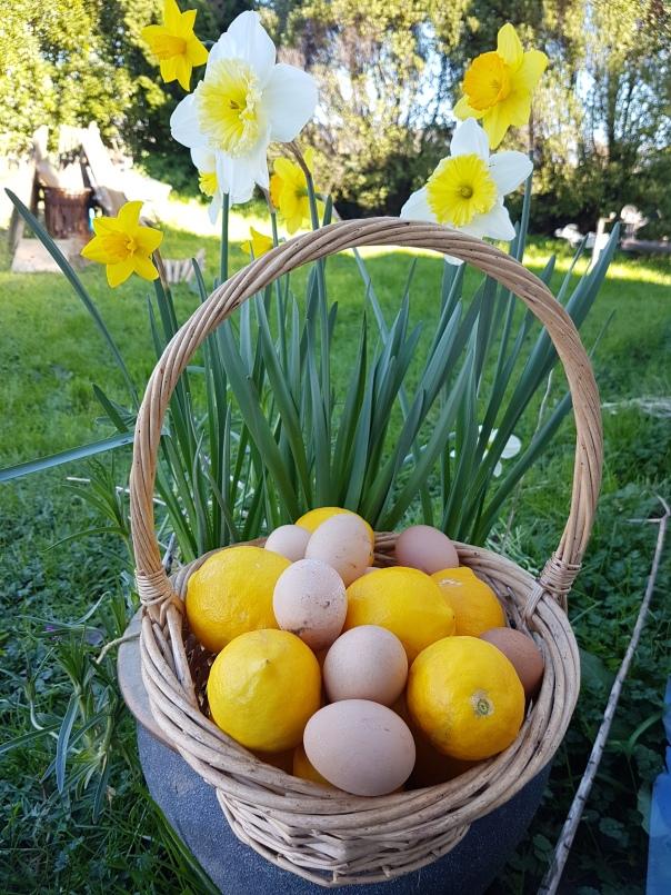 Eggs, lemons and daffodils
