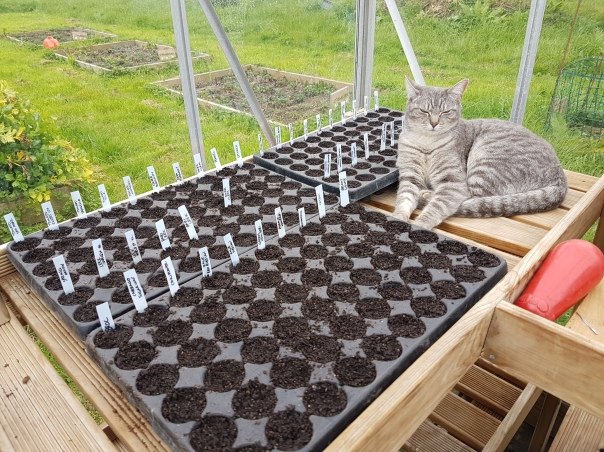 Fennel the cat in the greenhouse