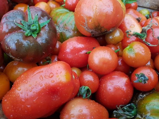 Mar: tomatoes were plentiful