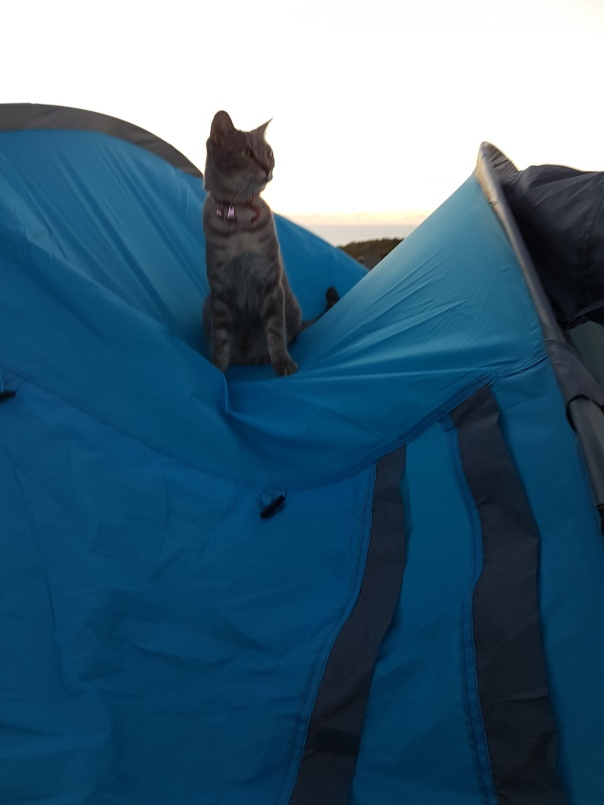 Fennel the Cat on the tent