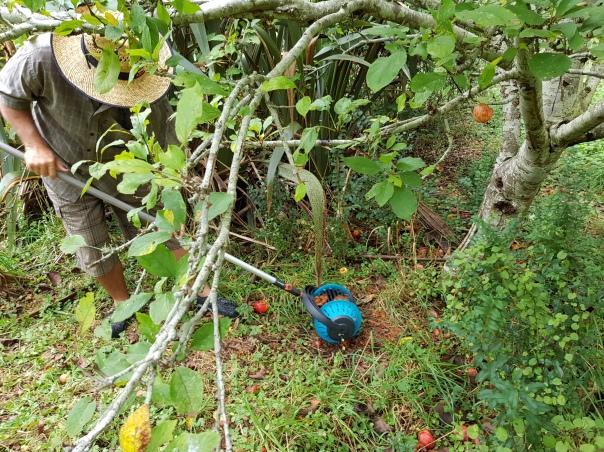 Gardena Fruit Collector