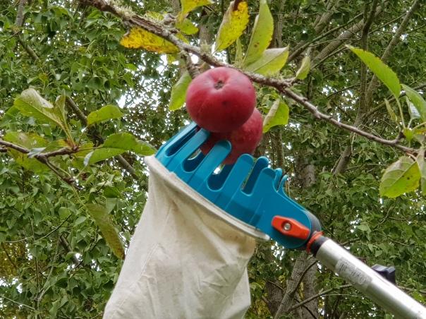 Gardena Fruit Picker