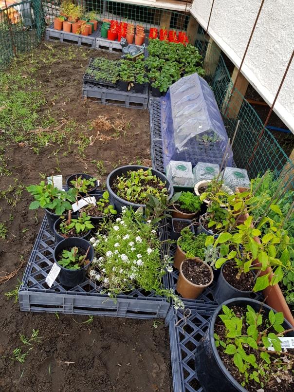 Temporary garden