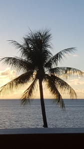 Coconut palm in the sunset