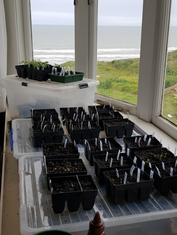 Seedlings in the bay window
