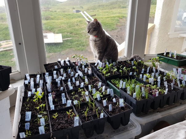 Fennel the Cat and the Seedlings