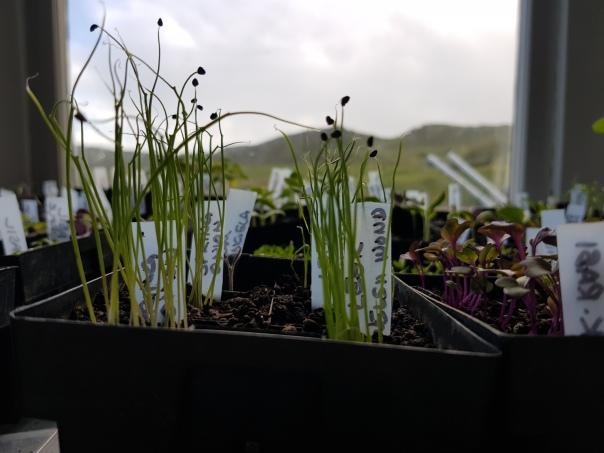 Seedlings on a gloomy day