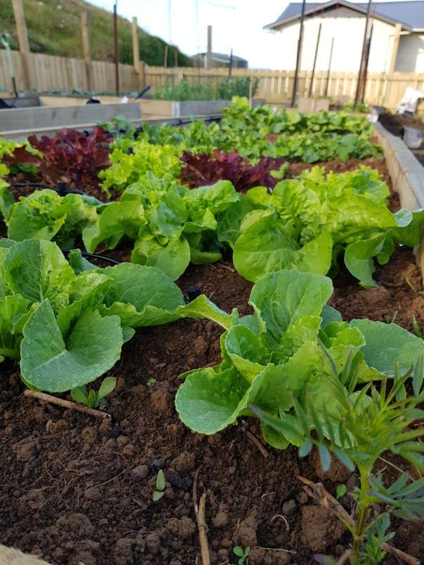 Salad bed