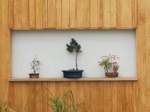 NZ Flower and Garden Show