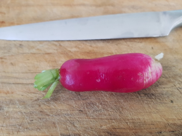 Topped and tailed radish