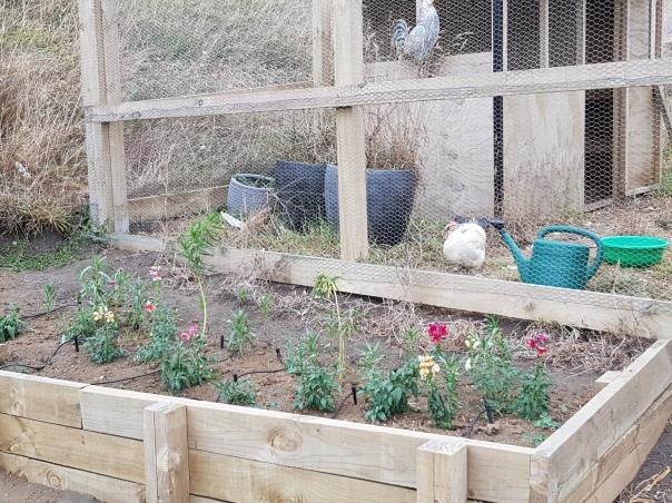 Bonus flower bed
