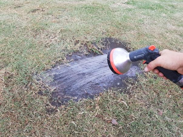 give the bare soil a good deep soak