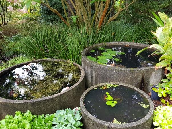 Water trough gardens