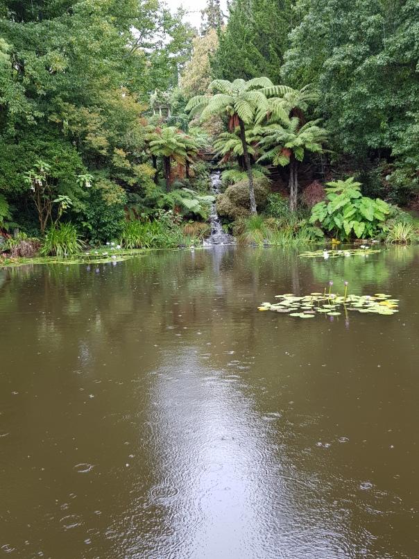 Rain at Ayrlie Garden