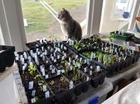 The seedlings were ready