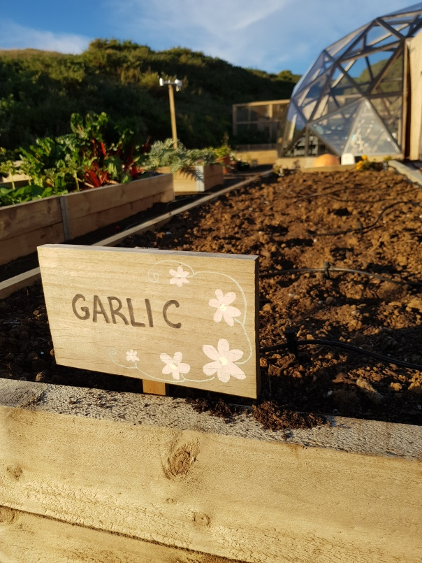 Garlic bed