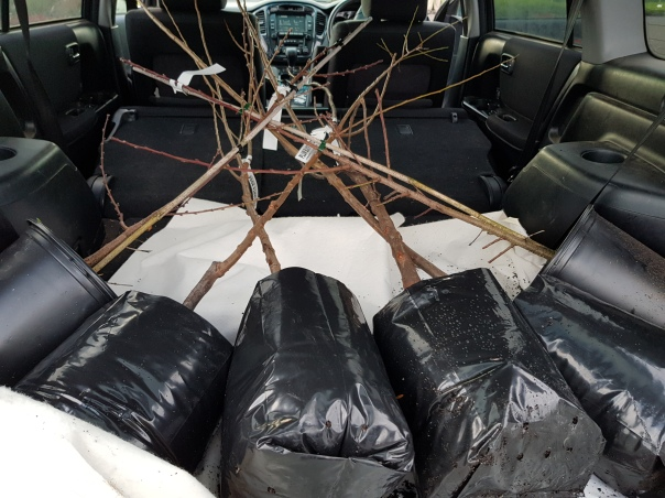 Fruit trees in the car