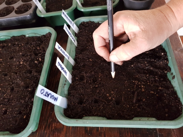 Seed sowing with a pencil