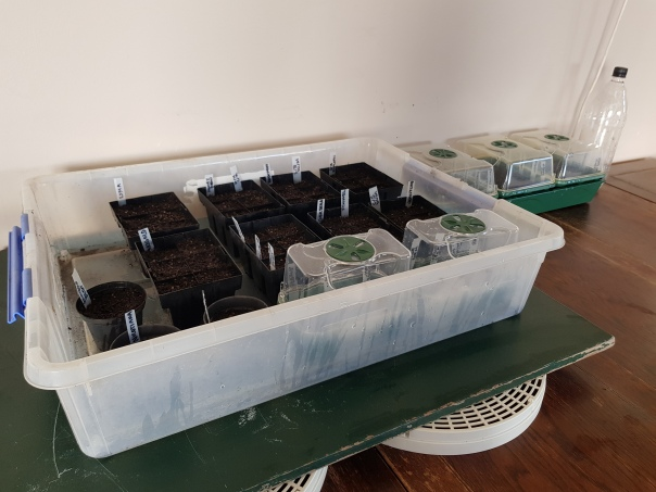 seedlings on heat mats